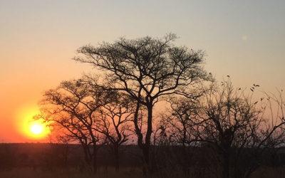 Skukuza Half Marathon. Kruger National Park, South Africa.
