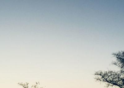 Skukuza Half Marathon | With Belles On