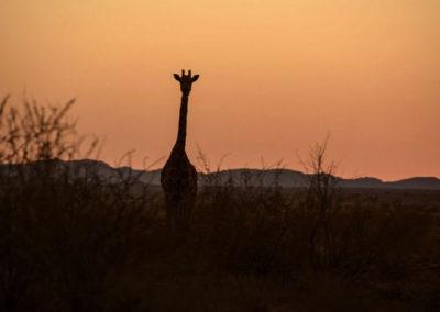 Kalahari Augrabies Extreme Marathon | With Belles On