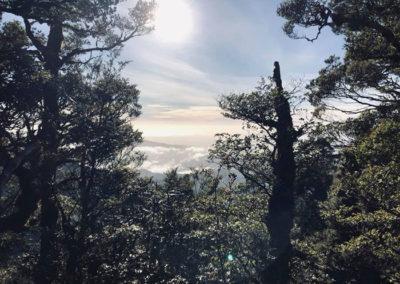 The Richmond Ranges, Marlborough Region   With Belles On