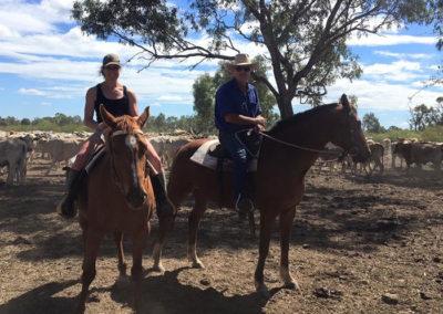 Pregnancy testing, Prairie, Queensland | With Belles On