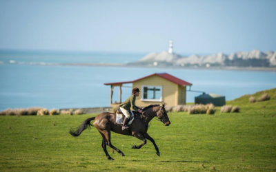 Horses and Hounds: NEW ZEALAND