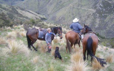 Tailing, Okuku Pass. New Zealand