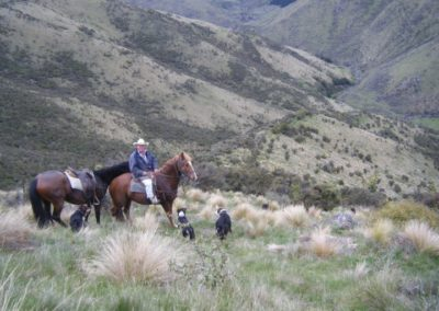 Tailing, Okuku, North Canterbury | With Belles On