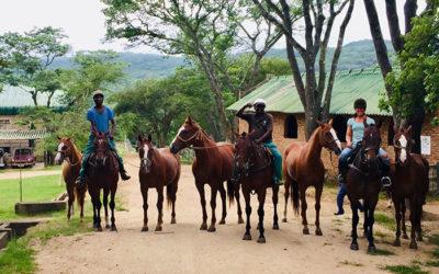 Horses and Hounds: ZIMBABWE