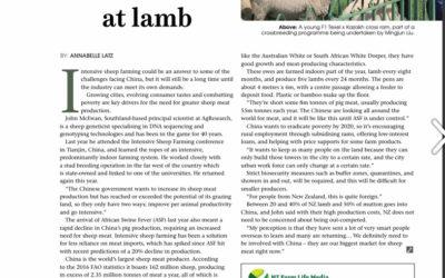 Intensive sheep farming. CHINA