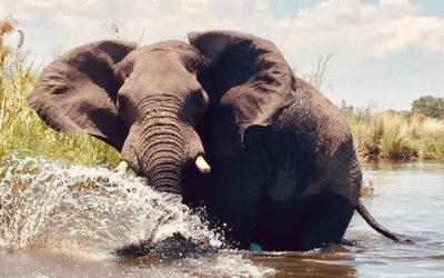 A couple of days in the Okavango Delta. BOTSWANA