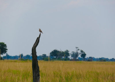 Okavango / WIth Belles On