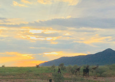 winemaking Namibia / with belles on