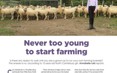 Breeding charollais sheep, never too young