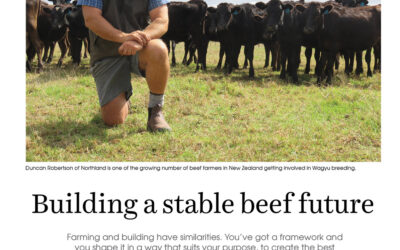 Building a stable beef future, New Zealand
