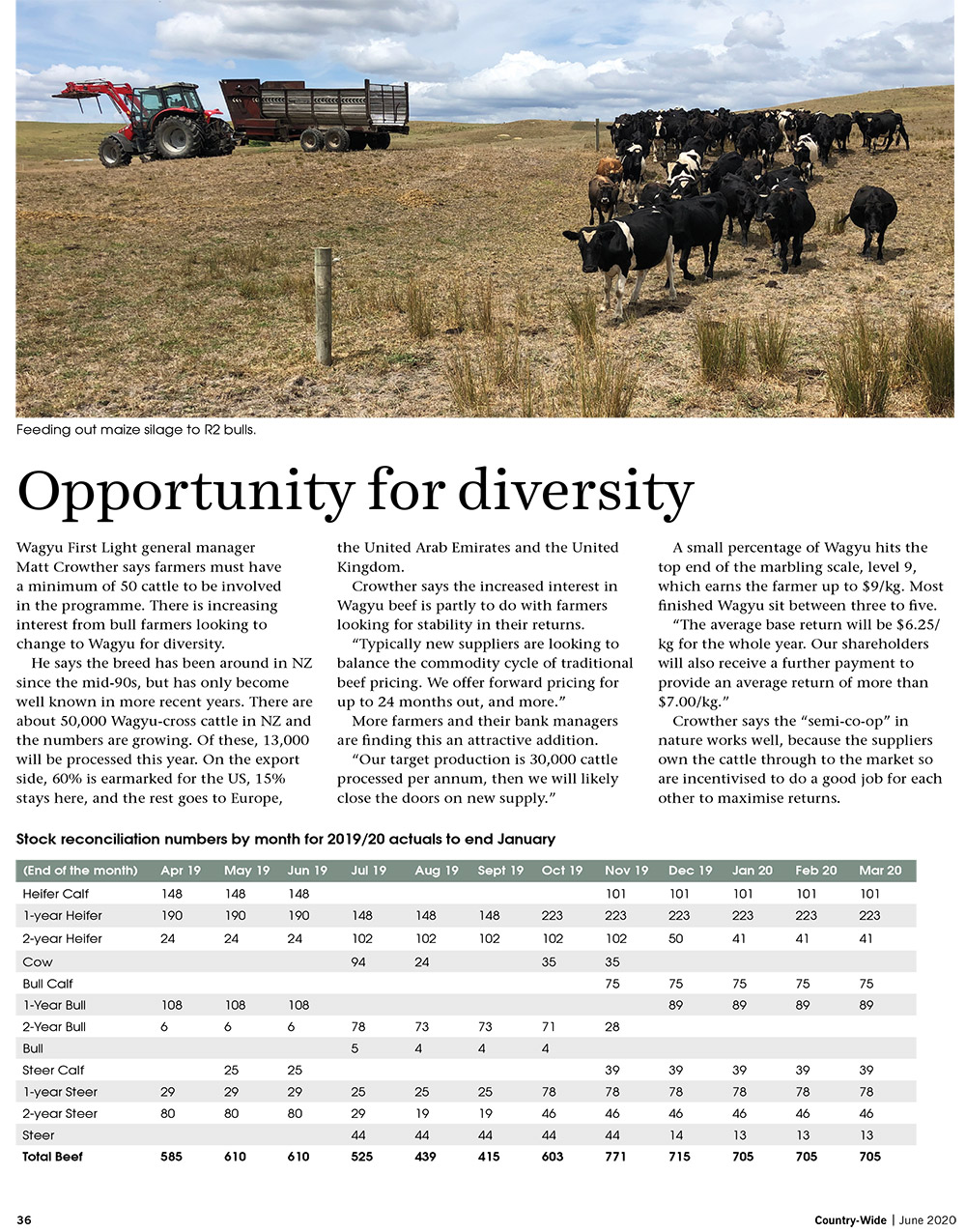 Building a stable beef future | With Belles On