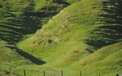 Taupo Ultra Marathon. New Zealand.